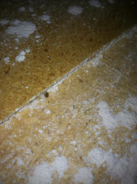 bed-bug-living-in-diatomaceous-earth